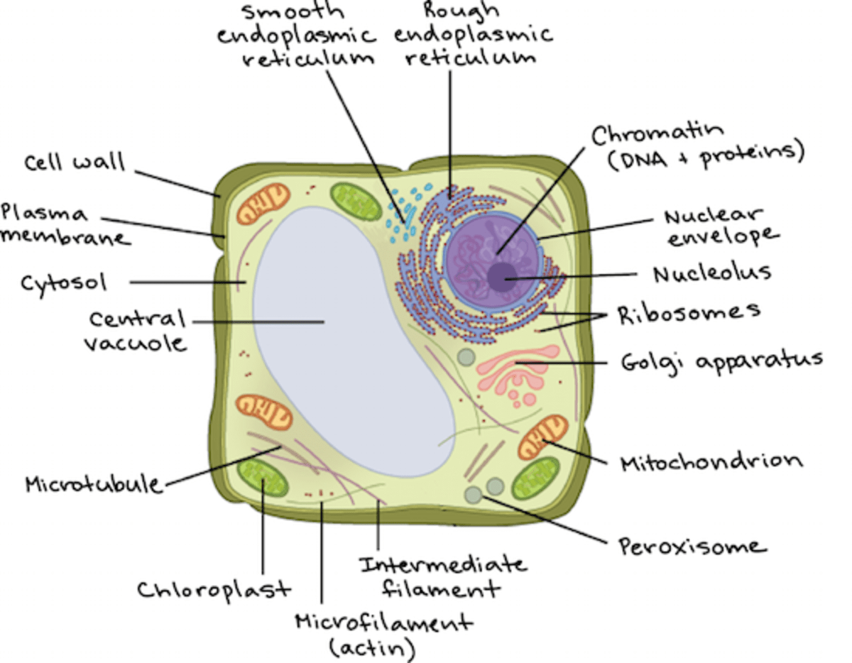 30 2d Worksheet Review Cell Organelles Answers
