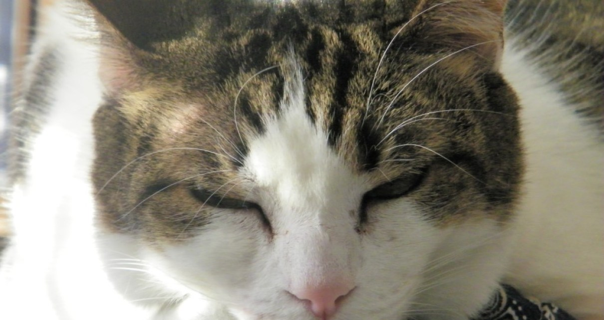 Cats Some Cat Secrets And Tips For Understanding Your Cat Hubpages