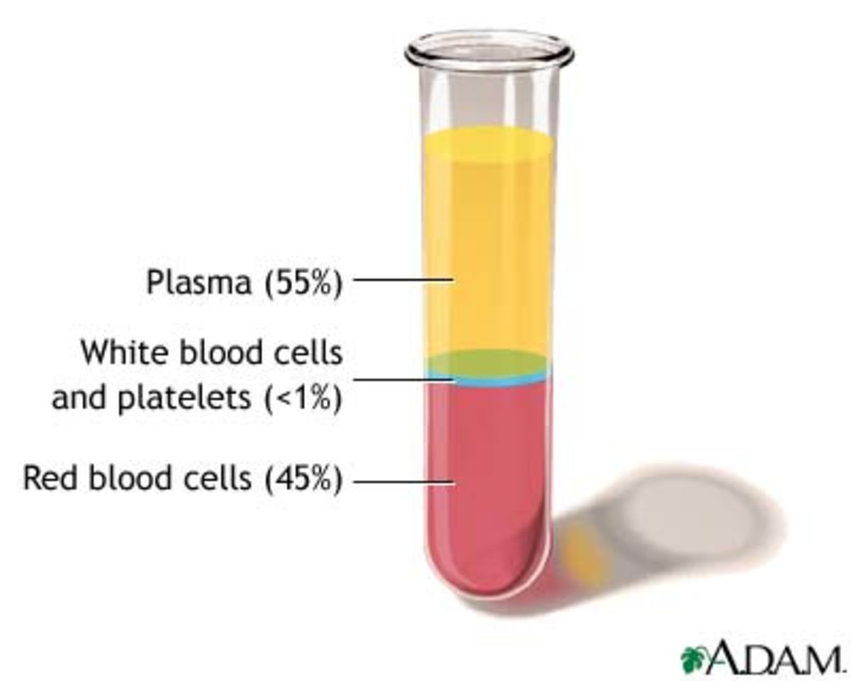 Facts About Blood Blood Cells Facts Function Of Whole