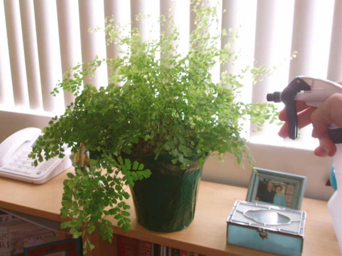 Indoor House Plants: Watering & Decorating