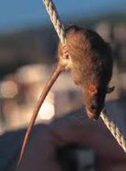 Image result for rats leaving a sinking ship