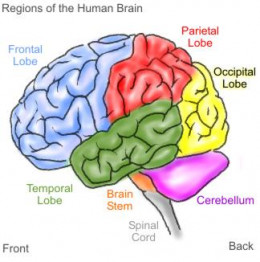 AS Psychology: The MultiStore Model of Memory | HubPages