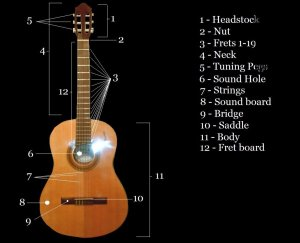 Restring an Acoustic Guitar | Spinditty