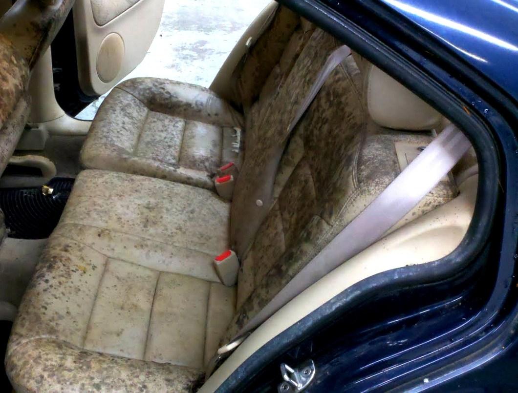 How Get Rid Black Mold Car Carpet Lets See