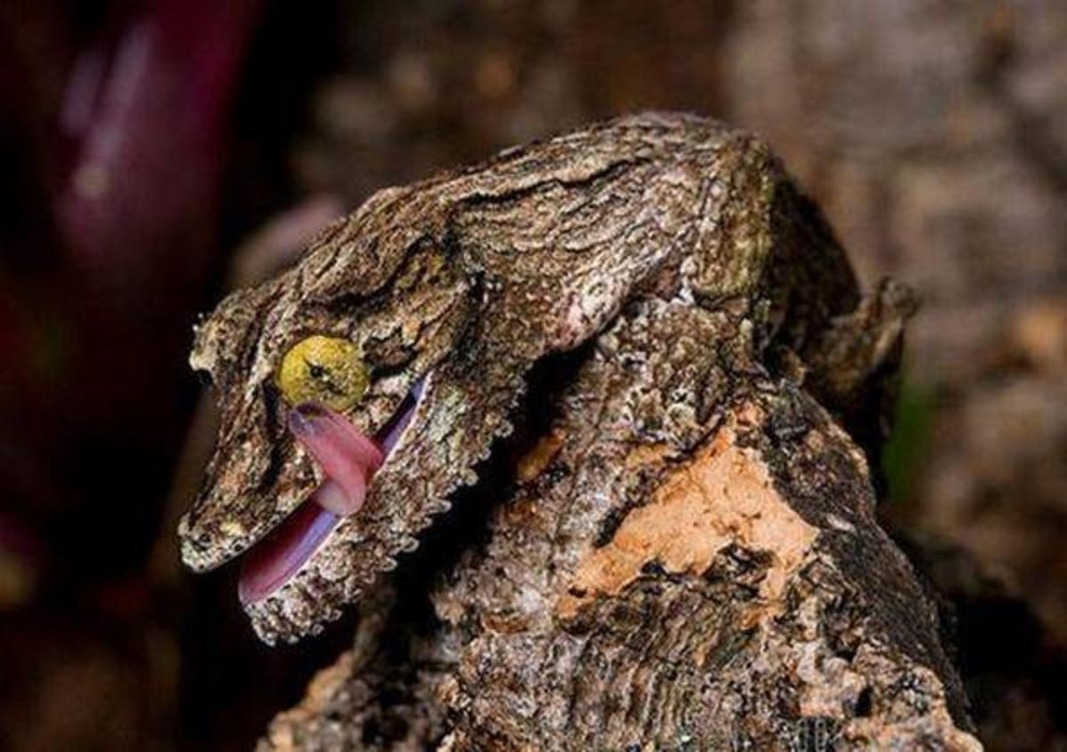 Animals That Hide The Science Of Mimicry And Camouflage