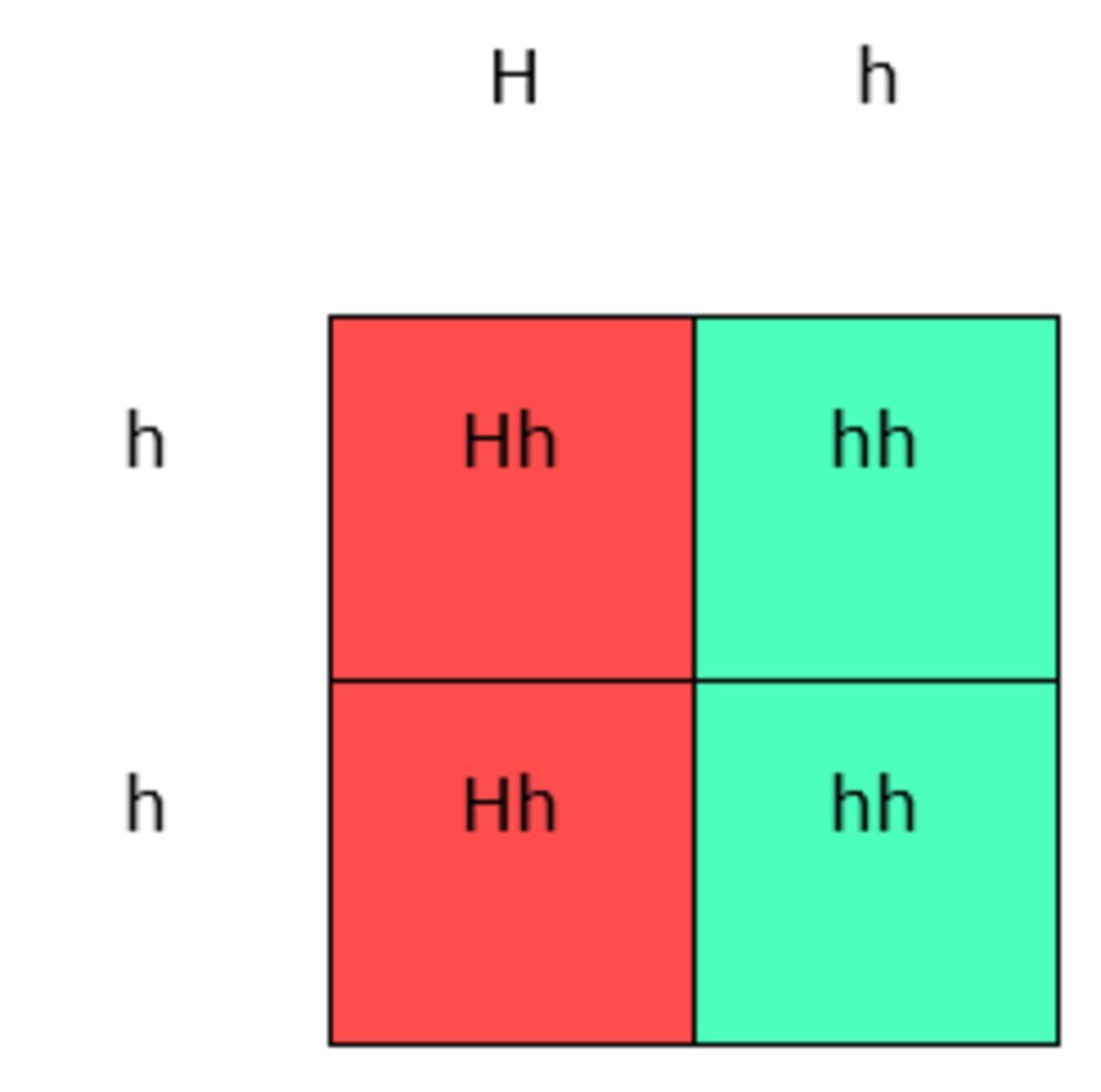 Huntington S Disease The Genetics