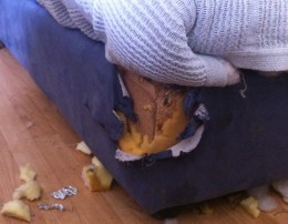 Someone ate the corner of the Sofa
