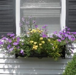 Best Flowers For A Super Sunny Window Box HubPages