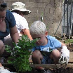 Homeschoolers Can Plan Their Own Garden Unit Study