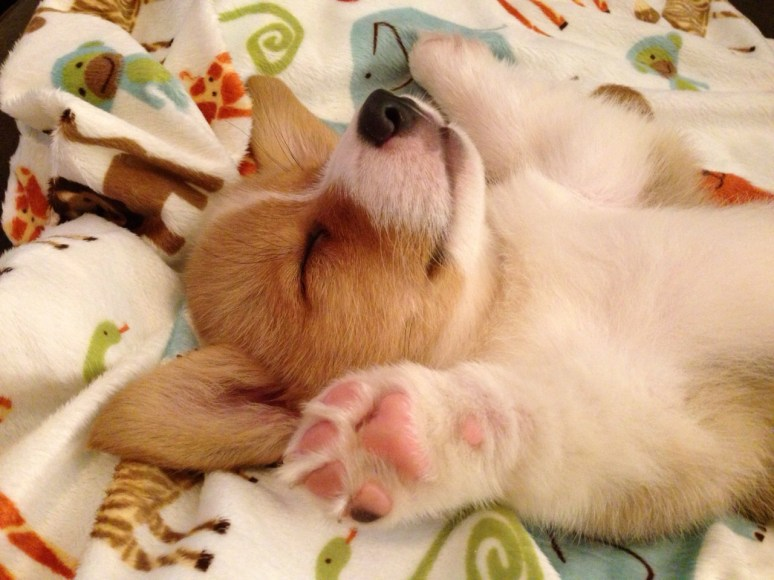 I keep a collection of puppy pictures standing by in case someone is having a bad day