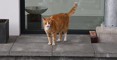 De oude kat