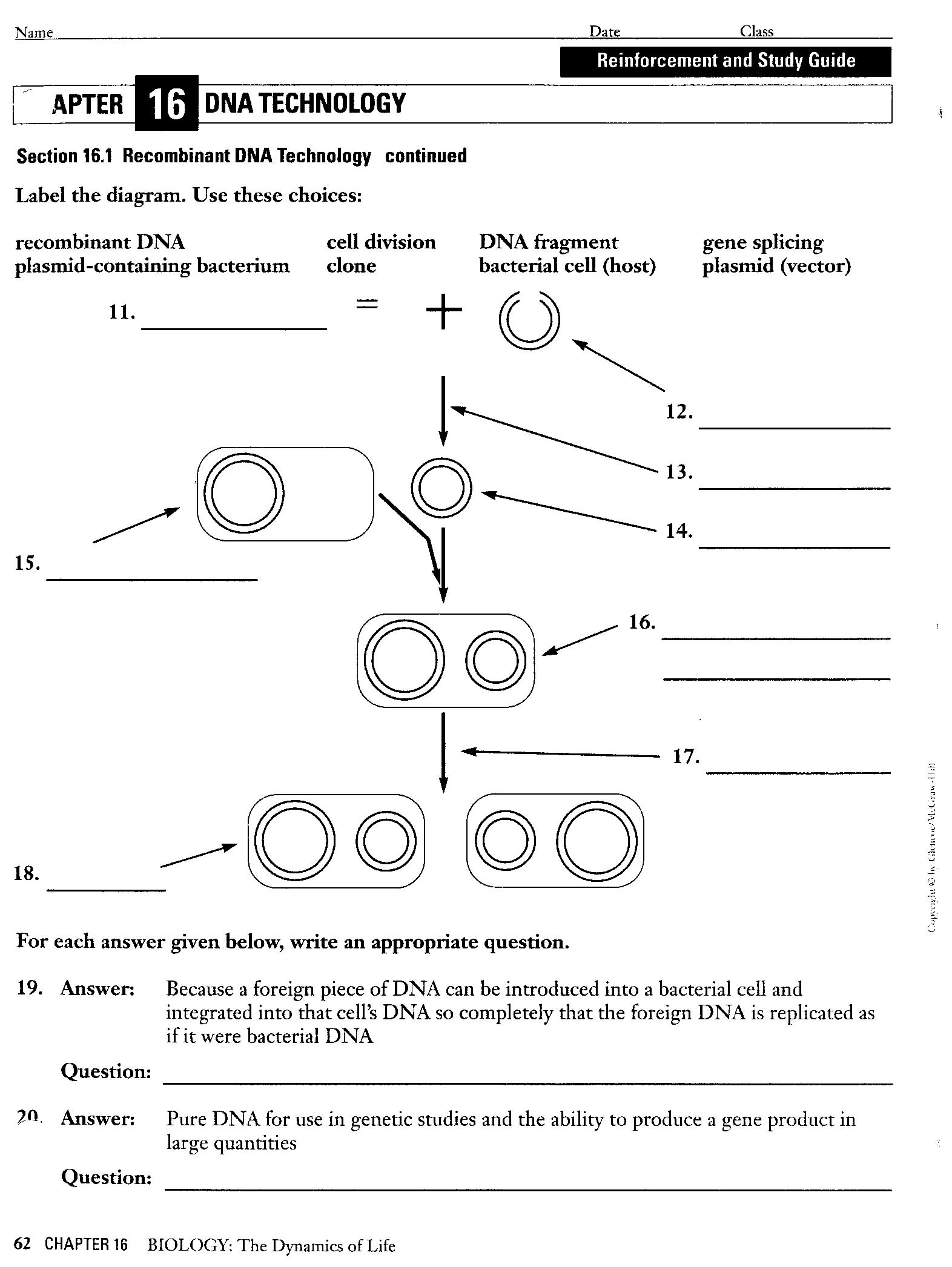 Worksheet Dna Technology Worksheet Grass Fedjp Worksheet