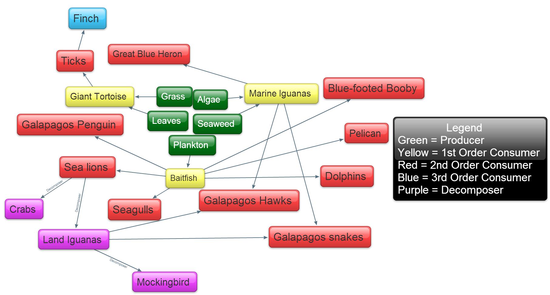 Galapagos Food Web Activity
