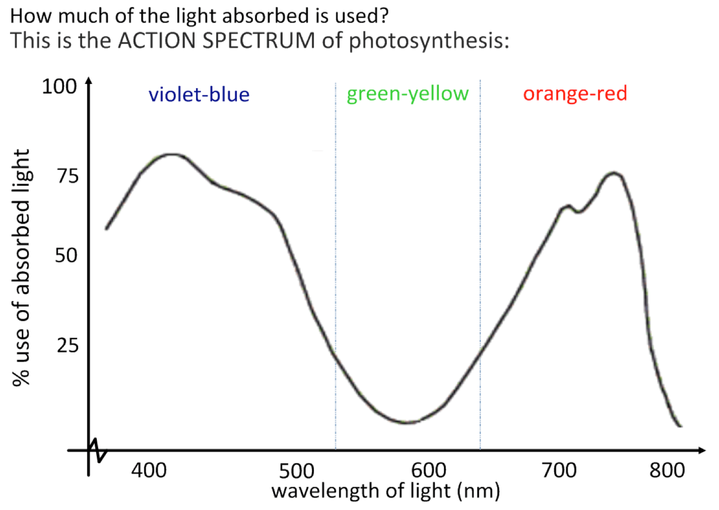 Equation For Light Dependent Reaction