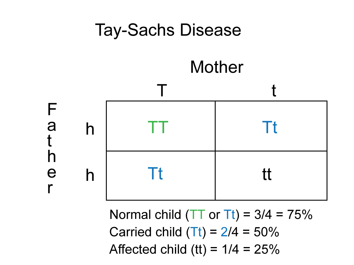Tay Sachs On Emaze