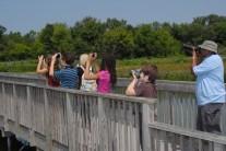Visitors enjoy birding at John Heinz National Wildlife Refuge.