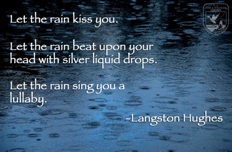 Let the rain kiss you. Let the rain beat upon your head with silver liquid drops. Let the rain sing you a lullaby. -Langston Hughes