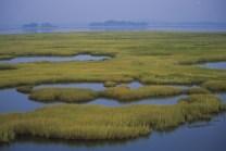 Coastal wetlands at Parker River National Wildlife Refuge in Massachusetts. Credit: Kelly Fike/USFWS