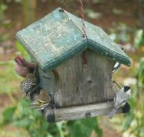 Purple Finch, two Pine Siskens, Evening Grosbeak, and a Chickadee- Photo by Jon Dale