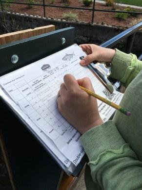 Volunteers record their findings. Credit: Jane Cairns