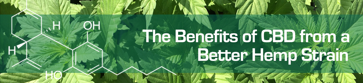 Benefits of CBD banner