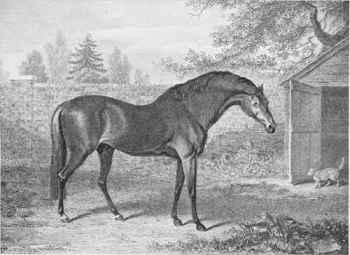 Godolphin Arabian George Stubbs