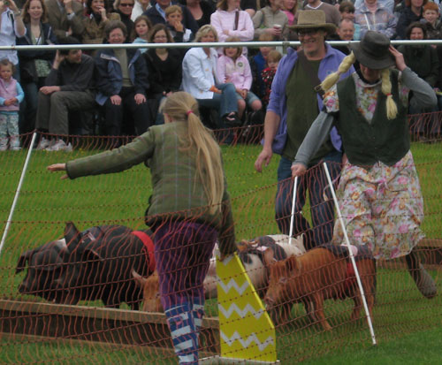 Helping with the pig racing at Surrey County Show