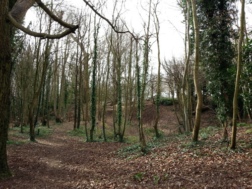 Badger Wood