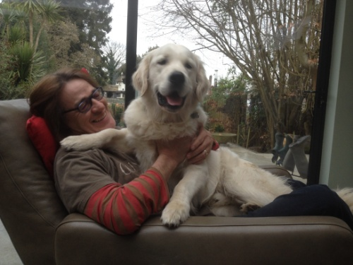Not really a lap dog