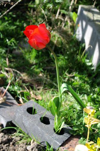 Brick tulip