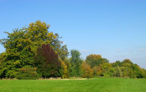 Farnham Park - Autumn 2015