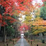 京都の紅葉は見所たくさん 観光コースを確認して短時間で色々回ろう