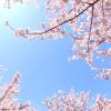 酒津公園でお花見を満喫するなら場所取りは必須!何時までなら確実か