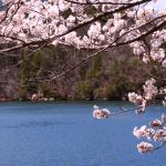 木曽川堤の桜まつりに屋台や出店はある?場所やアクセスなど徹底解説