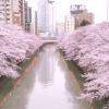 目黒川の桜の混み具合から考察する最適な最寄り駅とおすすめルート