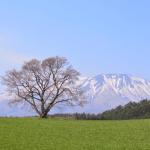岩手県の桜の名所といえば?北上展勝地の桜の見ごろを含む3選を紹介