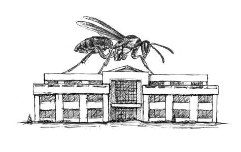 Wasps invade Orr Center, distract students