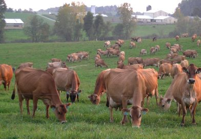 Production Sales Help Clover Patch Manage Herd Size