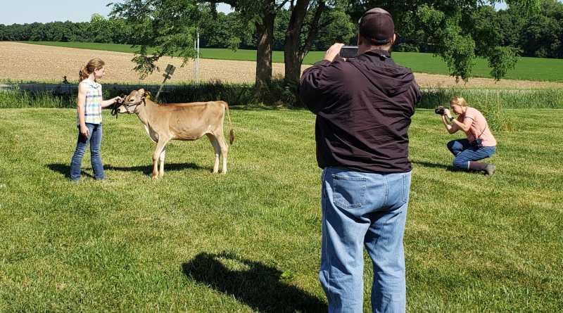 Jersey Staff Preps for National Heifer Sale