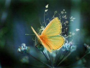 keltainenperhonen