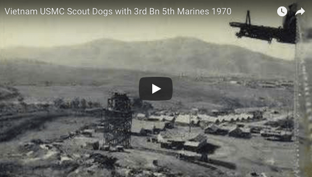 Vietnam USMC Scout Dogs with 3rd Bn 5th Marines 1970