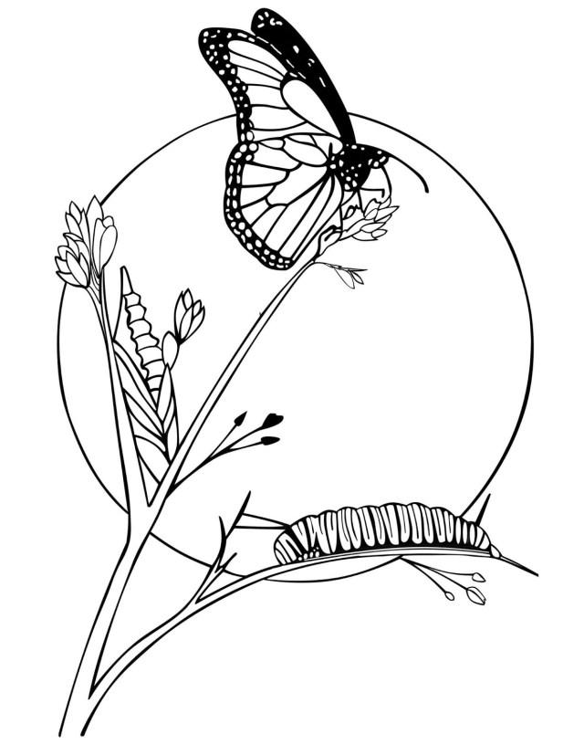 Gambar Bunga Dan Kupu-kupu : gambar, bunga, kupu-kupu, Contoh, Gambar, Mewarnai, Bunga, KataUcap