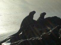 sunrise, Galapagos, 29 dec. 2009