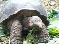 george, Galapagos, 28 dec. 2009