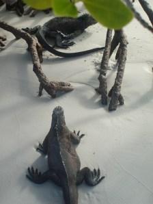 iguanas, Galapagos, 27 dec. 2009