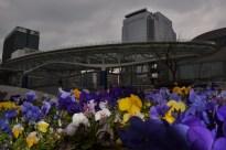 flowers, Nagoya, 11 mar. 2011