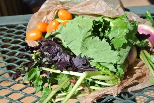 Miccosukee, Fruits et légumes de Thomas_usproject2016.com