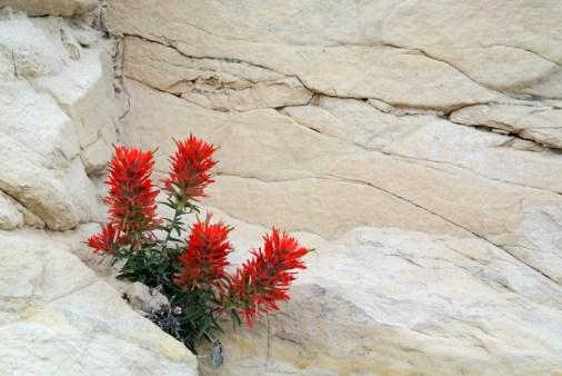 Fleurs dans le désert