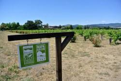 Napa Valley Wine (2)