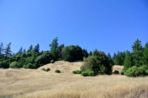 colline dorée